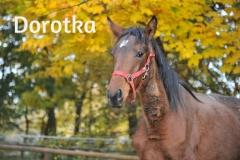 Dorotka 086